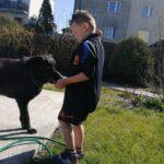 Pies ze schroniska – dlaczego warto?